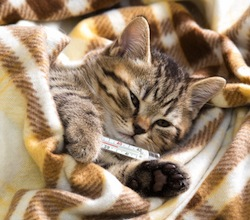 Ill kitten lying with high temperature