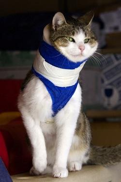 Katze Haustier