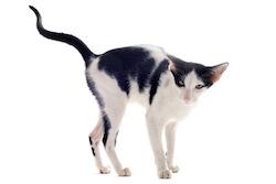 chat marquant son territoire