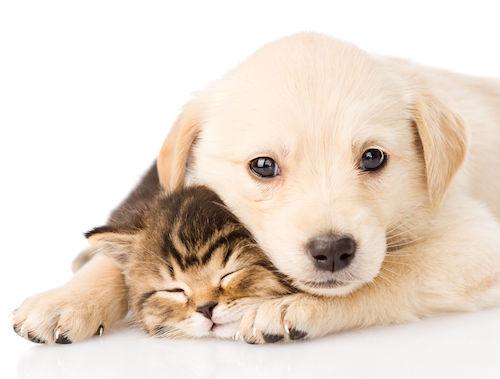 chiot et chaton ensemble